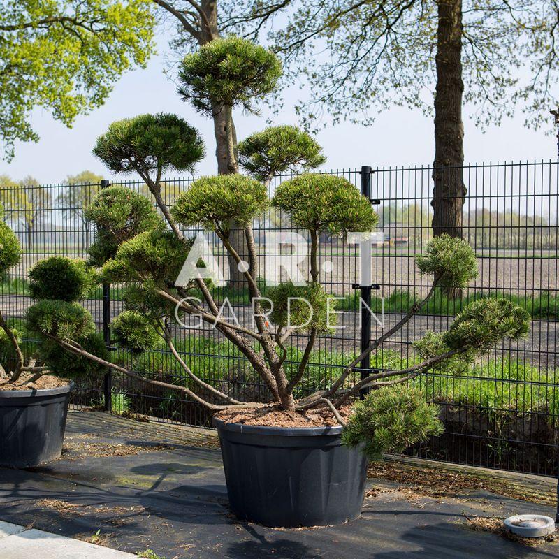 D coration barbecue electrique design orleans 21 for Chauffage plante exterieur