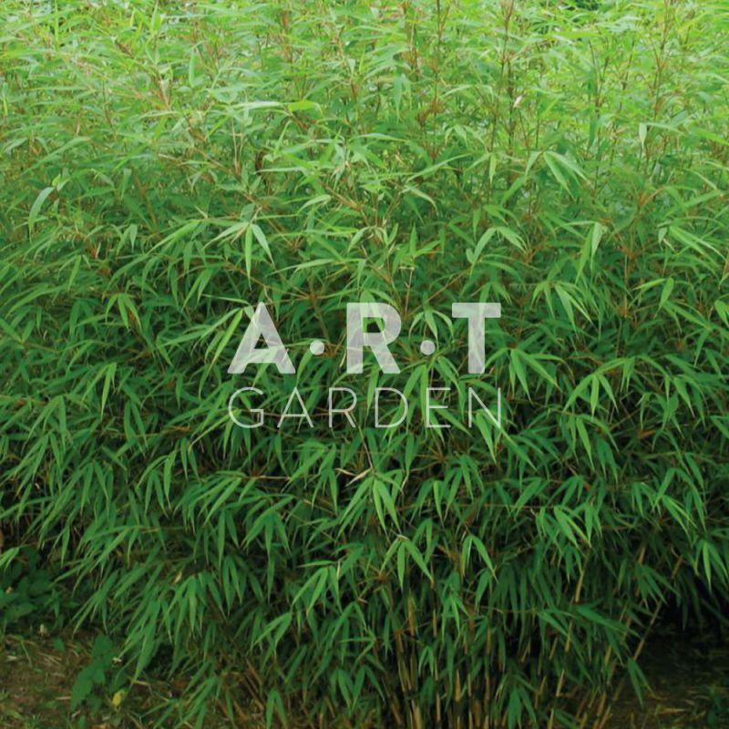 plantez un jardin de bambou au feuillage persistant. Black Bedroom Furniture Sets. Home Design Ideas