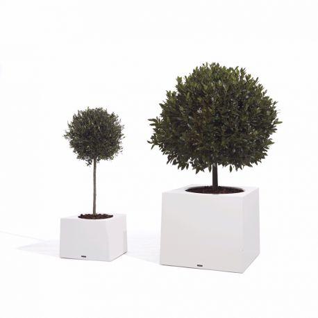 Pot design extremis Olea