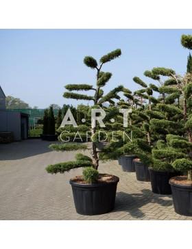 jardinerie en ligne arbres nuages prix grossiste 3 art garden. Black Bedroom Furniture Sets. Home Design Ideas