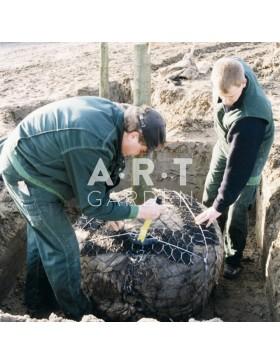 Kit ANCRAGE de MOTTE avec CABLE Platipus pour arbre jusqu'à 6m